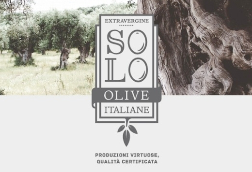 solo olive copy